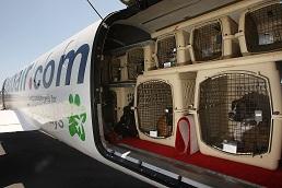 ¿Se puede viajar con los animales al extranjero?